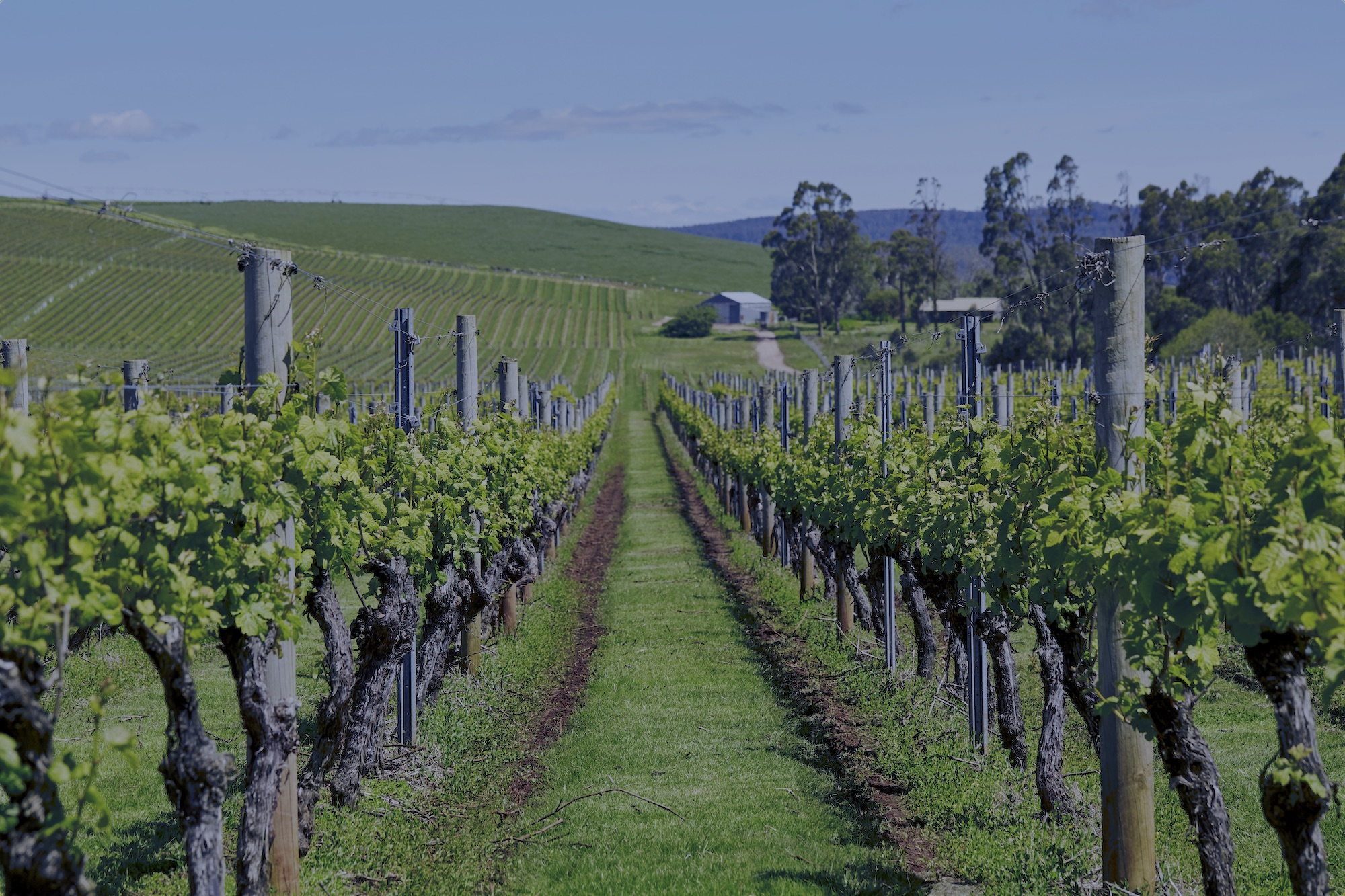 Jansz Tasmania Vineyards