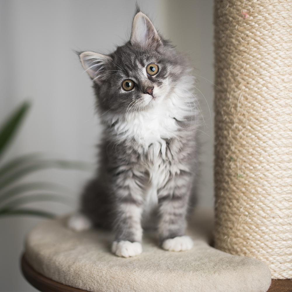 new kitten pack