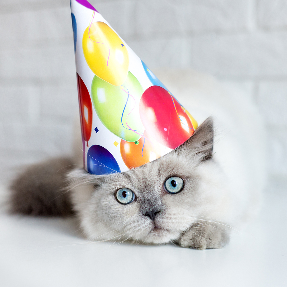 cat birthday pack