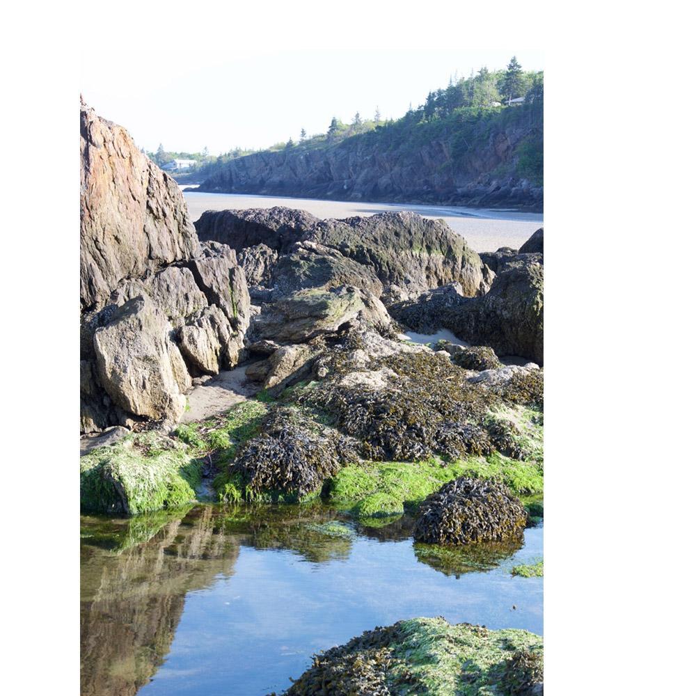 *Inside* Atlantic Kelp and Magnesium.