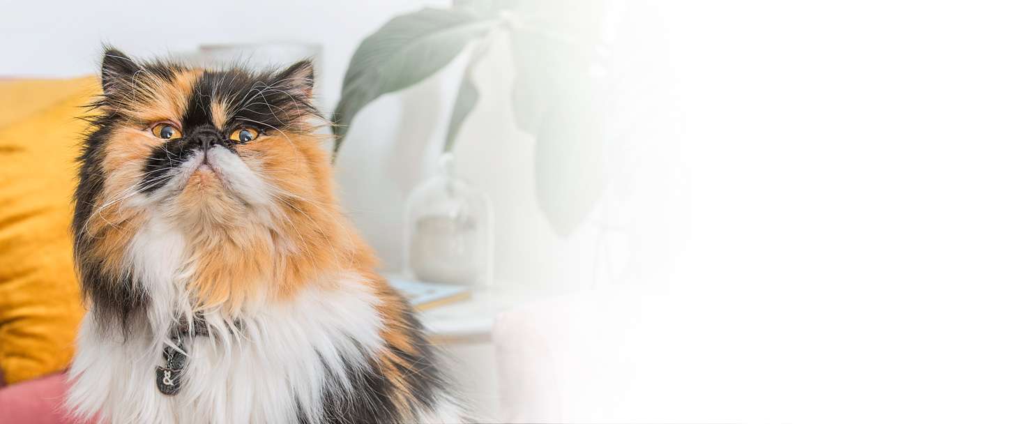 Wee Kitty Natural Cat Litter by Rufus and Coco Australia