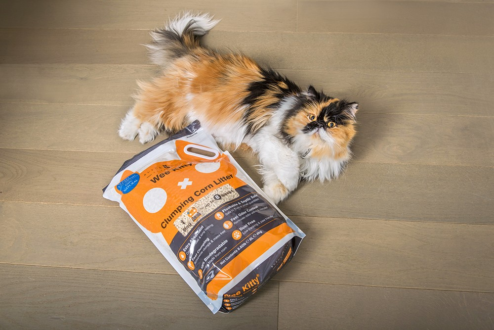 Clumping corn cat litter with calico persian cat